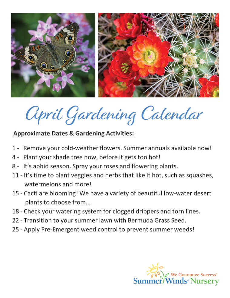 What to Plant in April & May
