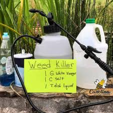 DIY Weed-Be-Gone Spray - New Alternative (2)