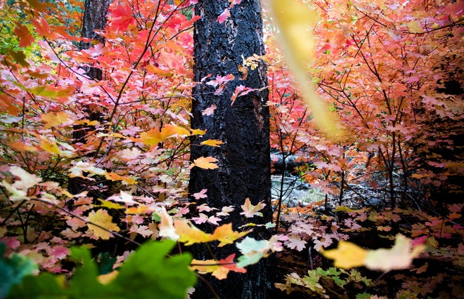 Arizona Fall Colors Webcams